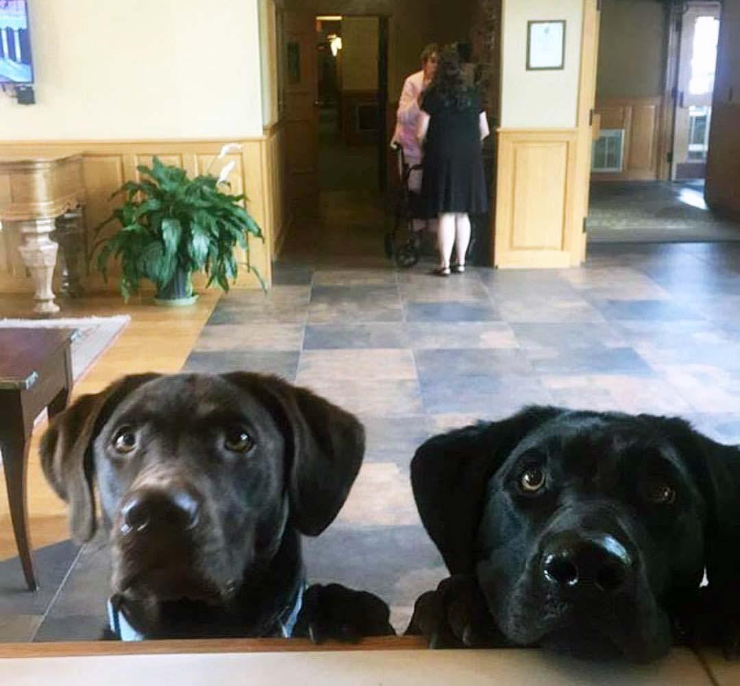 Every dog has its day | Lake Placid, Adirondacks