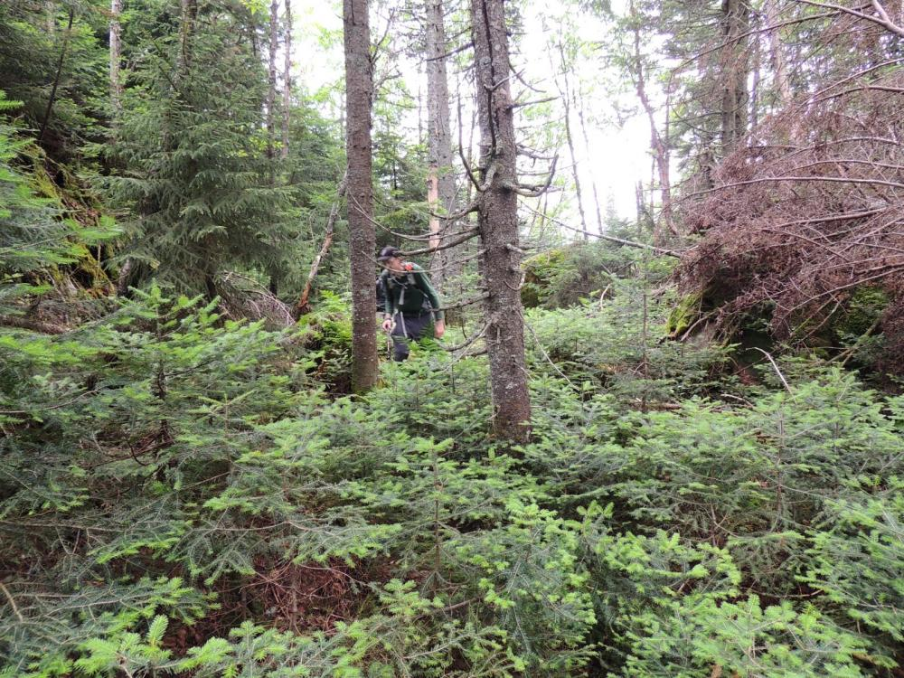 Periodic open forest help ease travel