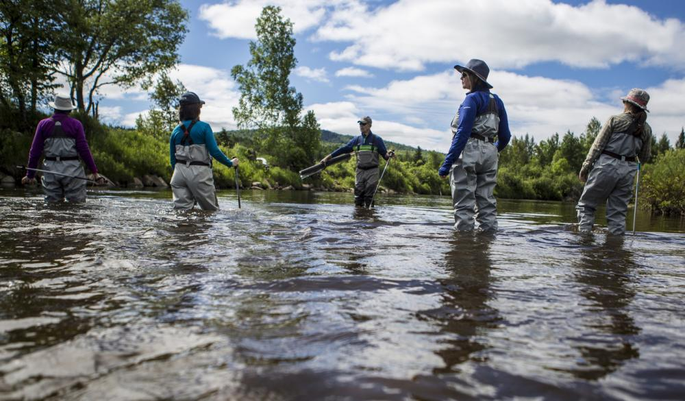 Five people in fishing waders walk through a shallow area of river.