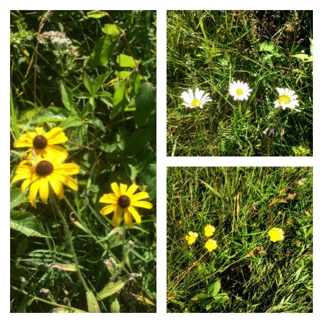 Brown- (or black-) eyed Susans (left), cheerful oxeye daisies (top right), and the classic buttercup (bottom right).