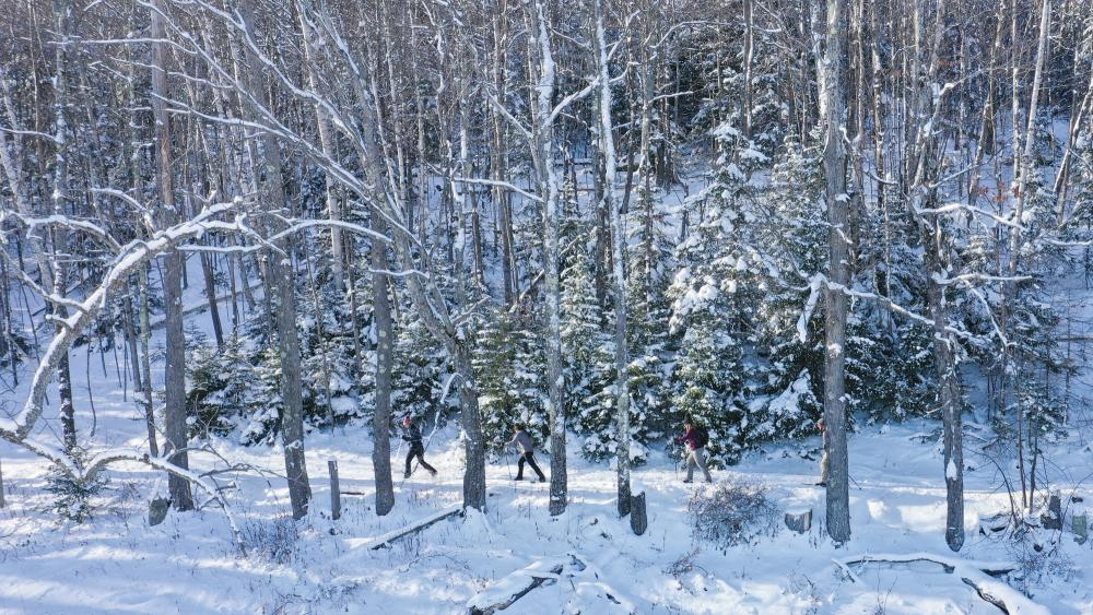 Scenic view of three skiers on a snowy, wooded cross-country ski trail.