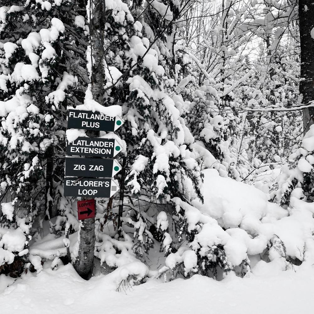 Cross-country ski trail with trail signs.