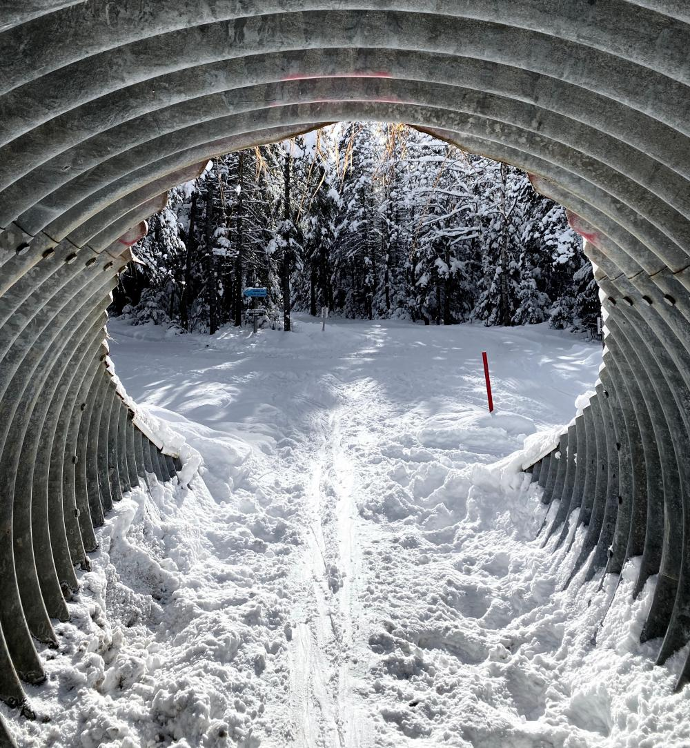 Tunnel to ski through on cross-country ski trail.
