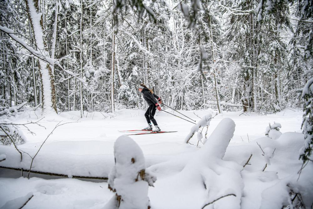 Woman cross-country skiing through a snowy forest.