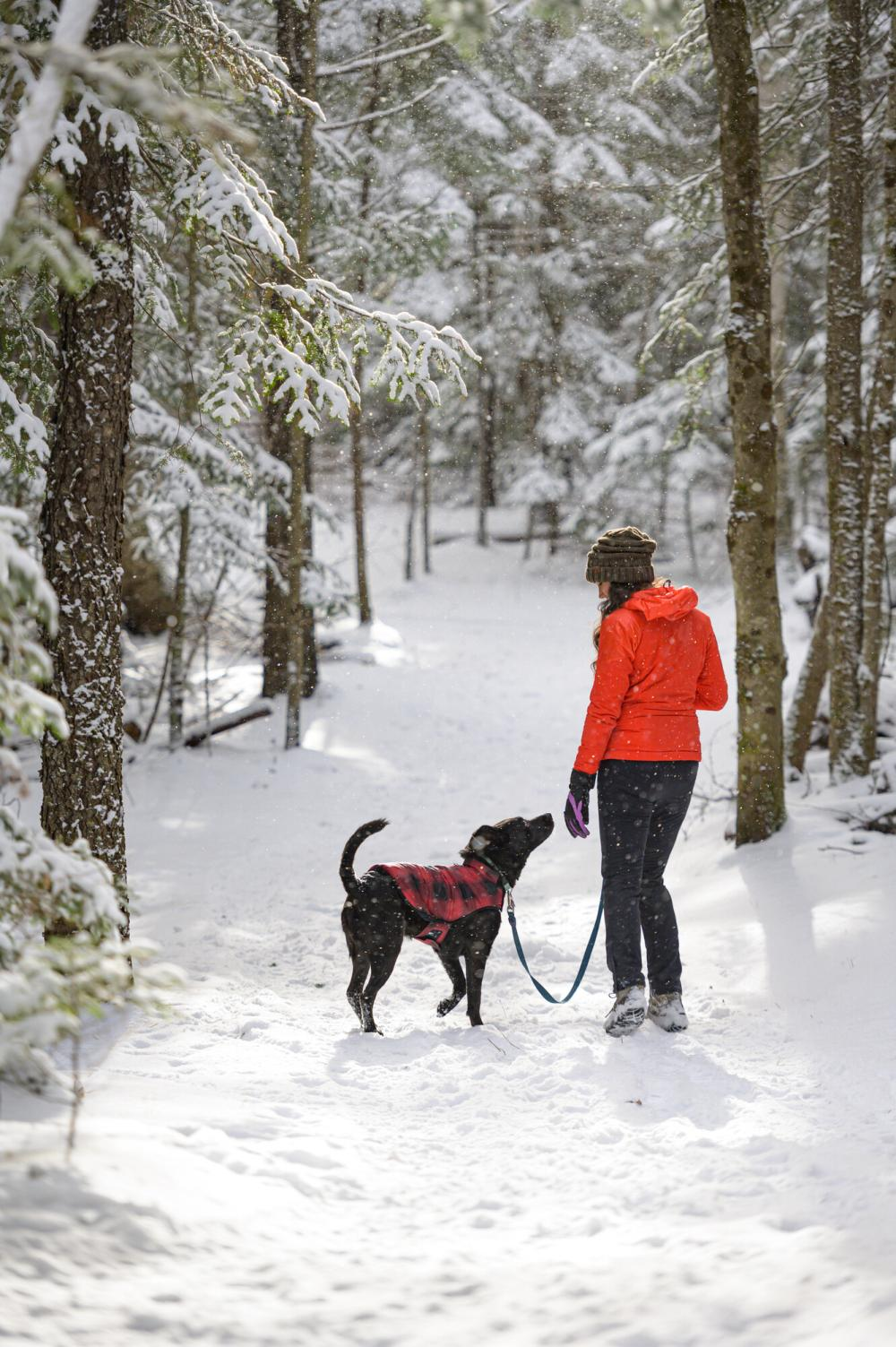 A woman and dog enjoy a snowy walk at Henry's Woods.