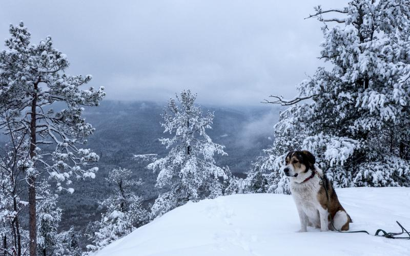 Winter summiting with a dog means making sure their paws are protected.